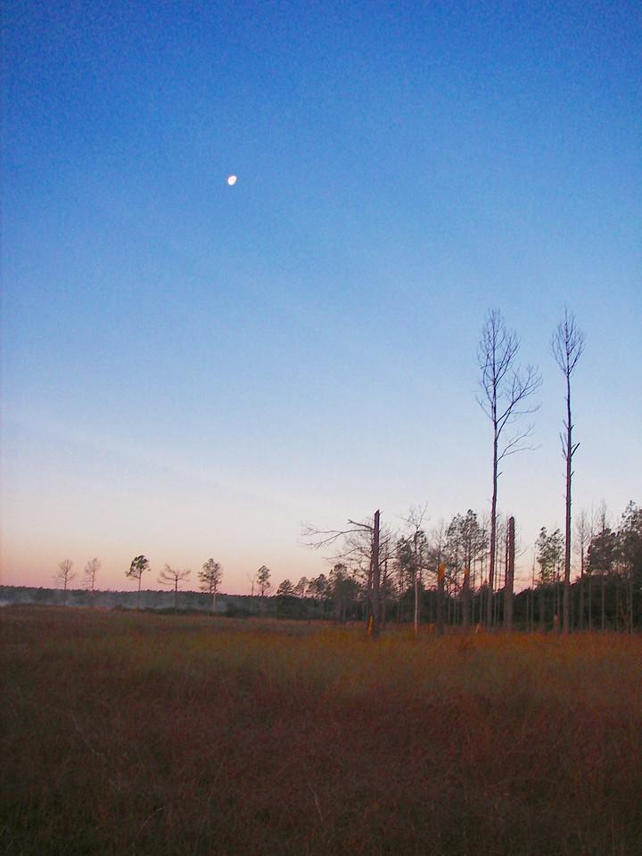 Moon over Hopkins Prairie<br /> photo credit: Deb Blick / Florida Trail Association