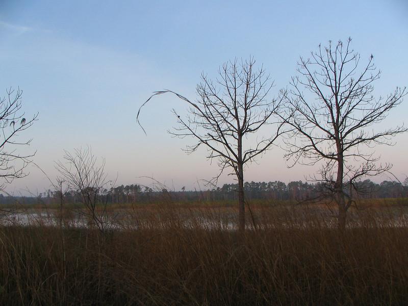 Trees and prairie<br /> photo credit: Janette Davison/ Florida Trail Association