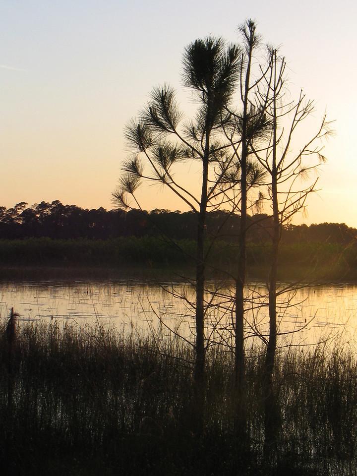 Pines silhoutted<br /> photo credit: Janette Davison/ Florida Trail Association