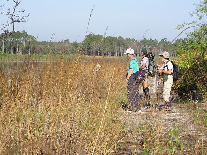 Hikers along Hopkins Prairie<br /> photo credit: Jack Hailman / Florida Trail Association