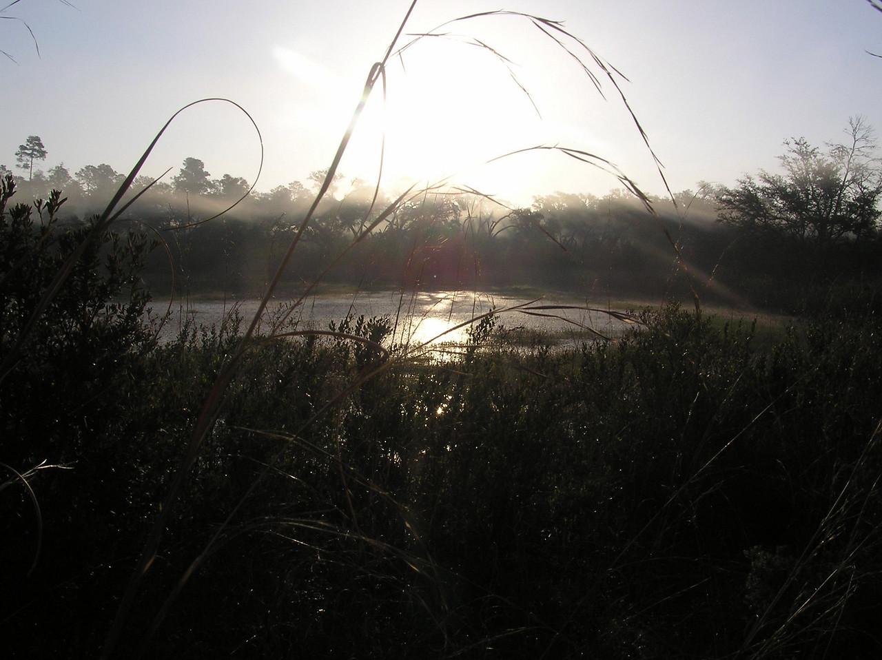 Morning mist<br /> photo credit: Jack Hailman / Florida Trail Association