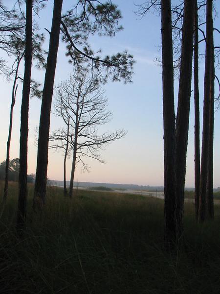 Late day scene<br /> photo credit: Janette Davison/ Florida Trail Association