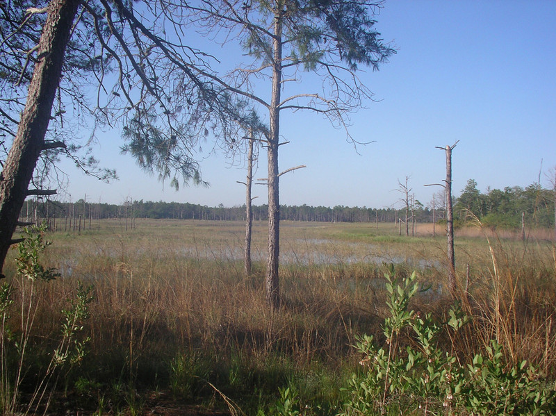 Along the edge of a wet prairie<br /> Photo credit: Ian Brown / Florida Trail Association