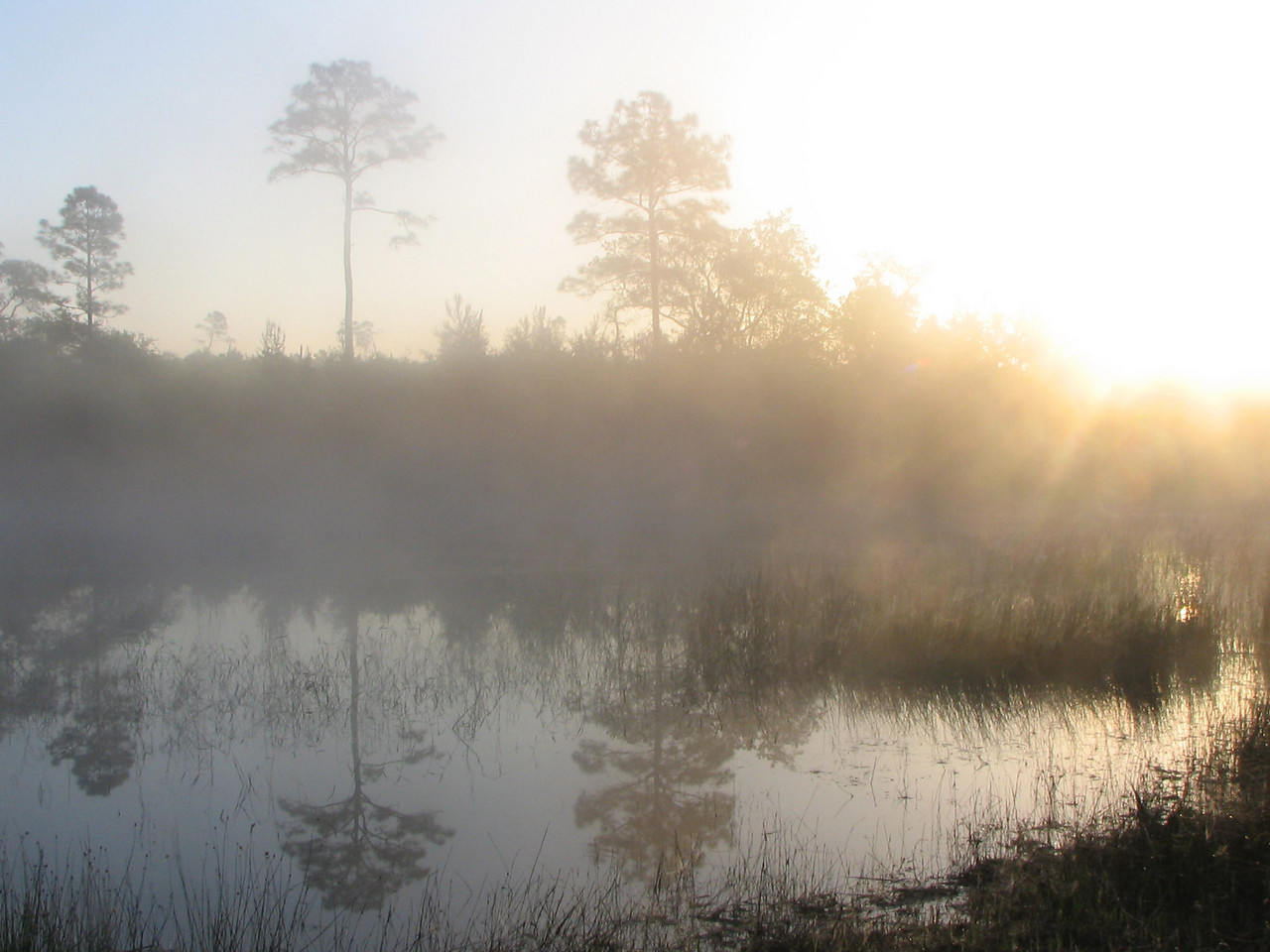 Mist on pond at dawn<br /> Photo credit: Janette Davison / Florida Trail Association