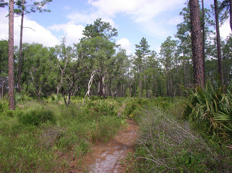 Along the Florida Trail<br /> Photo credit: Ian Brown / Florida Trail Association