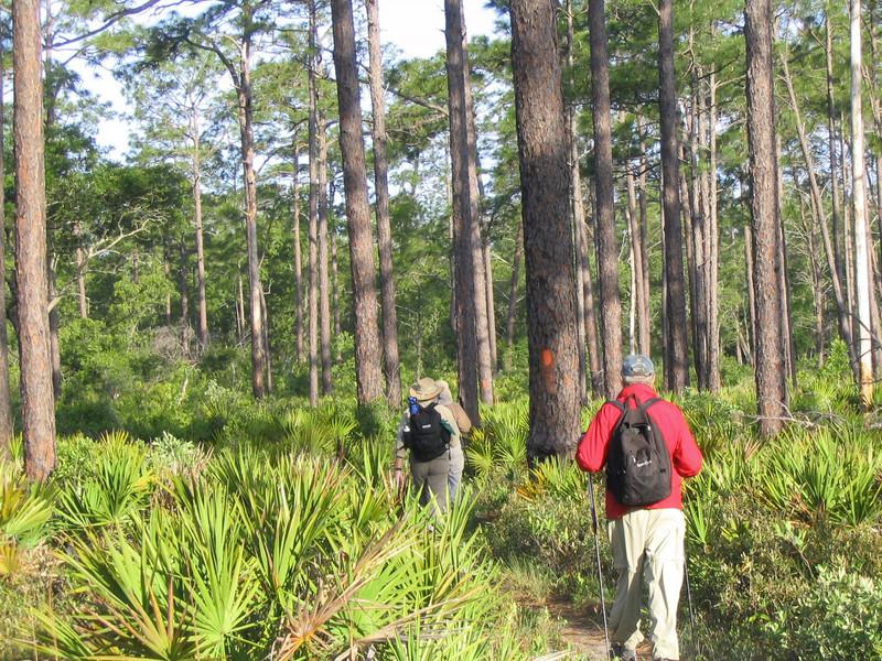Backpacking the Ocala<br /> photo credit: Linda Benton / Florida Trail Association