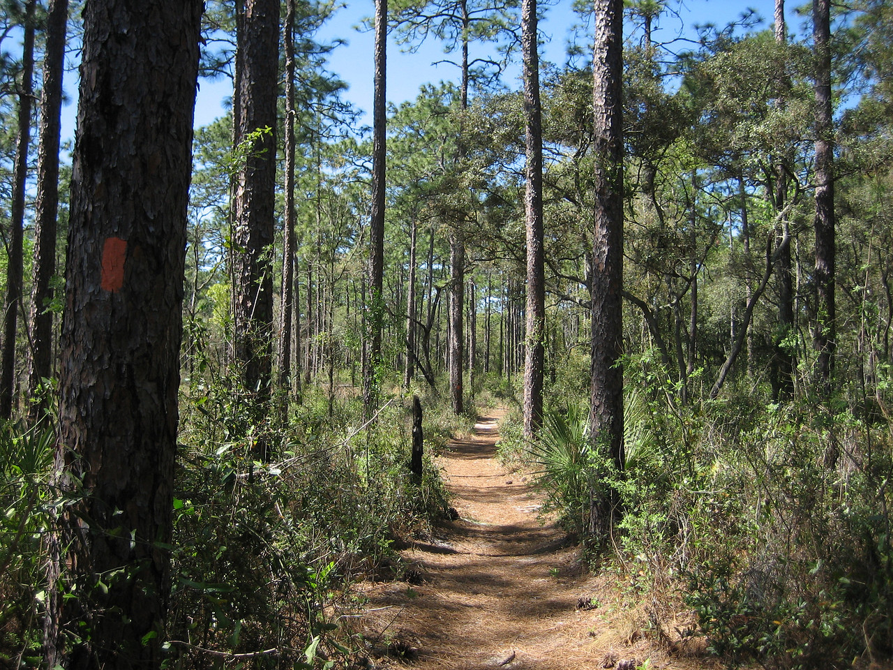 Florida Trail near Clearwater Lake<br /> photo credit: Sandra Friend / Florida Trail Association