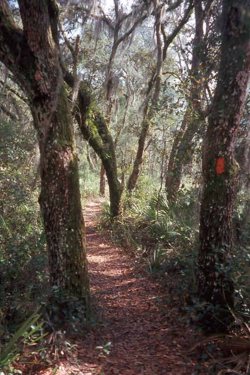 The Florida Trail at Pat's Island<br /> photo credit: Sandra Friend / Florida Trail Association