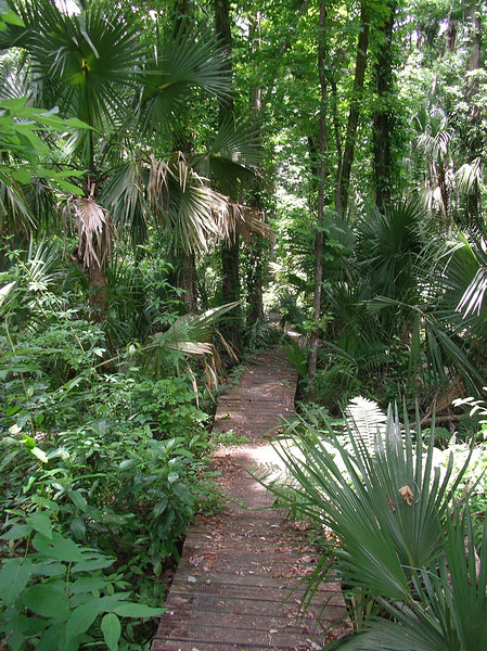 Boardwalk south of Alexander Springs<br /> Photo credit: Ian Brown / Florida Trail Association