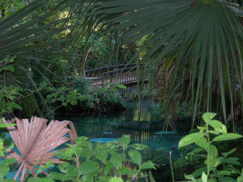 Fern Hammock Springs<br /> Photo credit: Pheobe Dowdy / Florida Trail Association