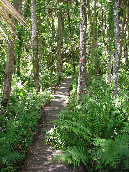 Fern-lined boardwalk<br /> Photo credit: Ian Brown / Florida Trail Association