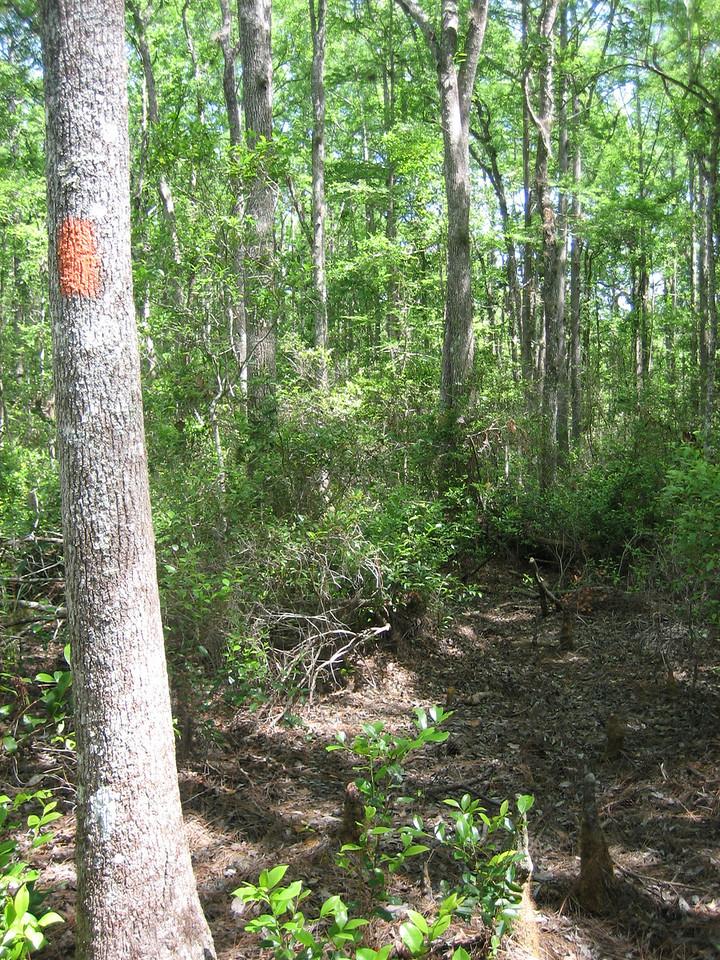 Hulls Creek area<br /> photo credit: Sandra Friend / Florida Trail Association