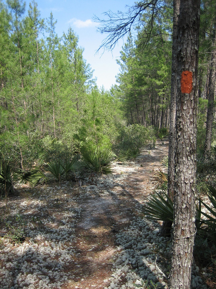 Foamy deer moss lines the footpath through the scrub forest<br /> photo credit: Sandra Friend / Florida Trail Association