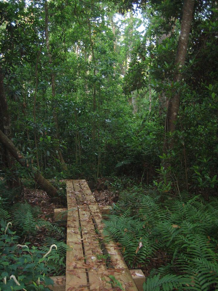 Boardwalk through a fern-lined bayhead swamp<br /> photo credit: Sandra Friend / Florida Trail Association