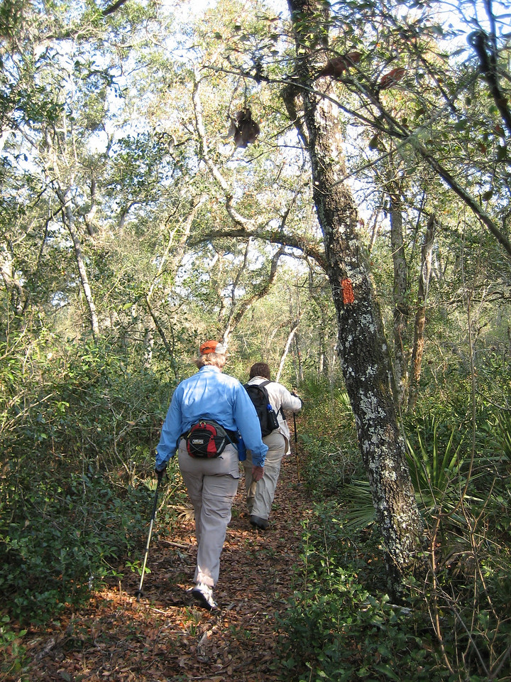 Hikers in the Big Scrub<br /> photo credit: Sandra Friend / Florida Trail Association