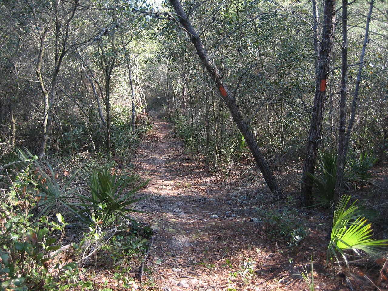 The footpath through the scrub forest<br /> photo credit: Sandra Friend / Florida Trail Association