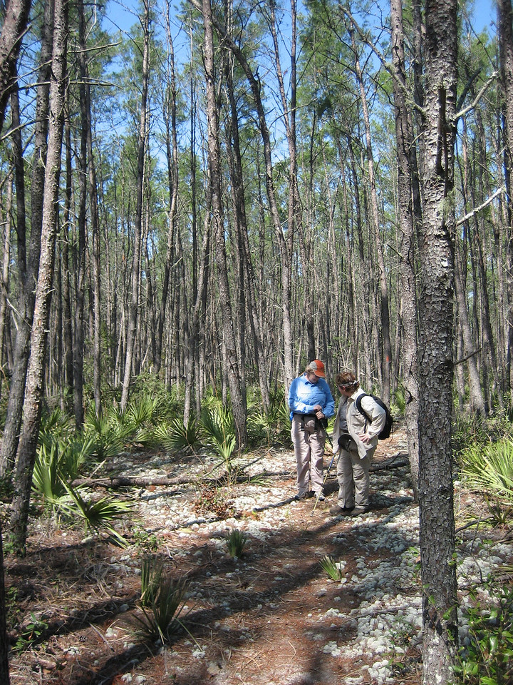 Hikers in the Big Scrub <br /> photo credit: Sandra Friend / Florida Trail Association