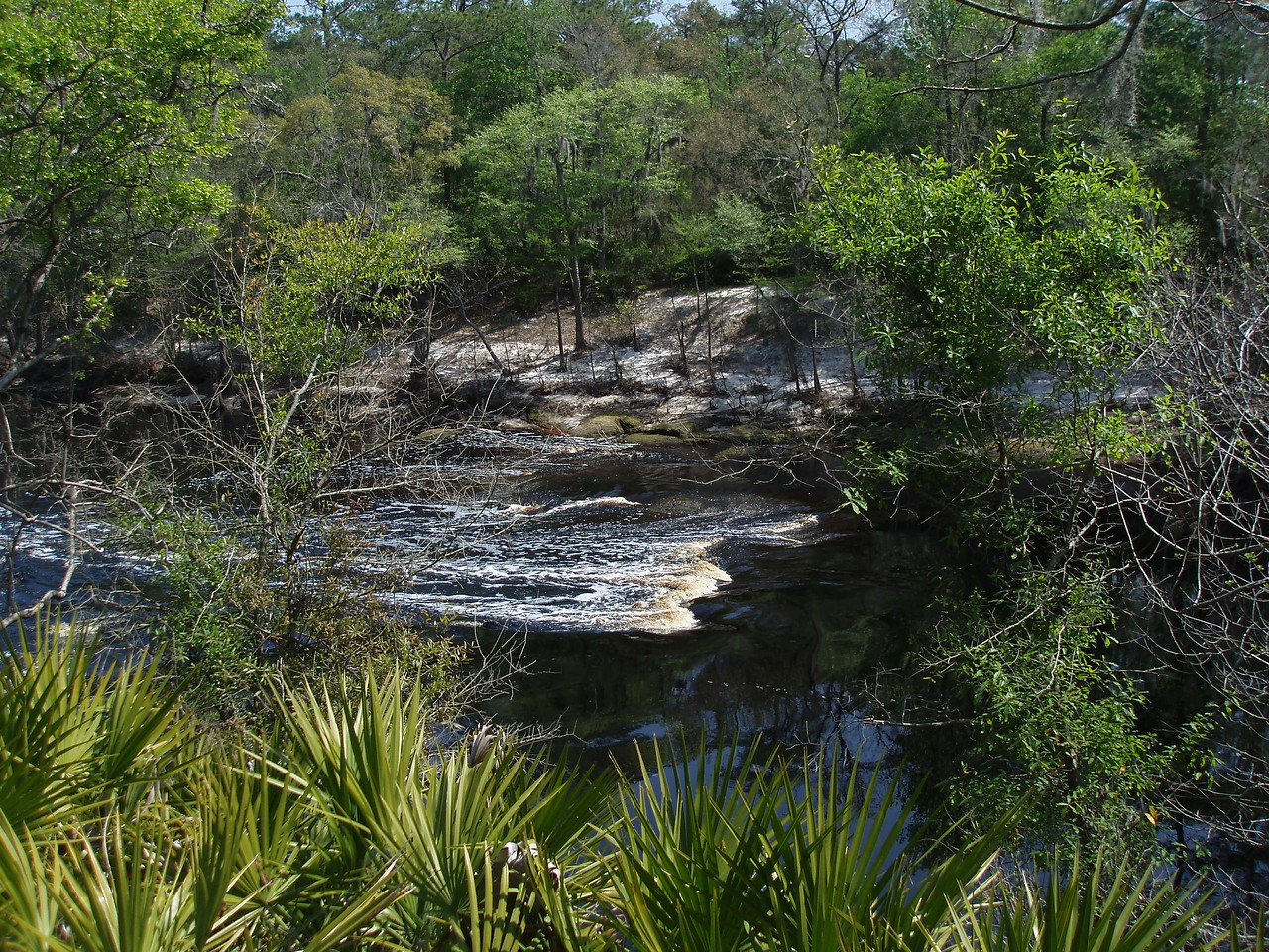 Views of the Suwannee River from the Florida Trail<br /> PHOTO CREDIT: Robert Coveney / Florida Trail Association