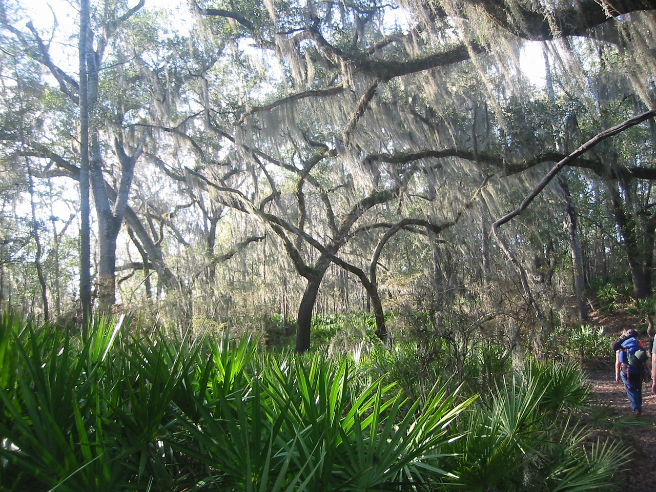 Along the Florida Trail west of Stephen Foster. PHOTO CREDIT: FTA / Frank Bouchard