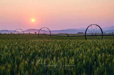 Smoky Wheat Field