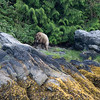 """Tide Rip Grizzly Tours - Telegraph Cove, Vancouver Island, British Columbia, Canada  Visit our blog """"<a href=""""http://toadhollowphoto.com/2016/06/21/telegraph-cove-glendale-cove-perfect-place-leave-heart/"""">A Perfect Place To Leave Your Heart</a>"""" for the story behind the photo."""