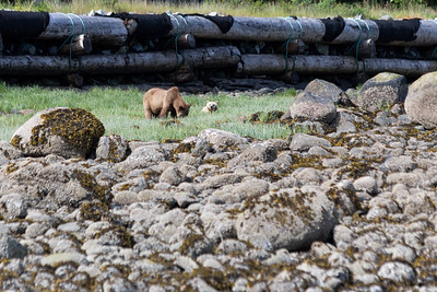 "Tide Rip Grizzly Tours - Telegraph Cove, Vancouver Island, British Columbia, Canada  Visit our blog ""A Perfect Place To Leave Your Heart"" for the story behind the photo."