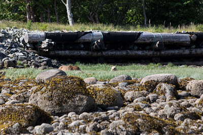 Tide Rip Grizzly Tours - Telegraph Cove, Vancouver Island, British Columbia, Canada