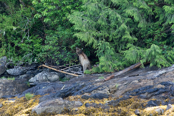 Tide Rip Grizzly Tours – Telegraph Cove, Vancouver Island, British Columbia, Canada