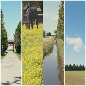 15.05.2016 // Parco Agricolo Milano Sud