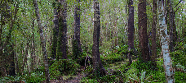 Trees Ridge Track Kaitoke Regional Park Aug 2013