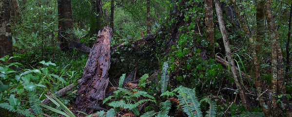 Old Log Kaitoke Regional Park Aug 2013 (1)