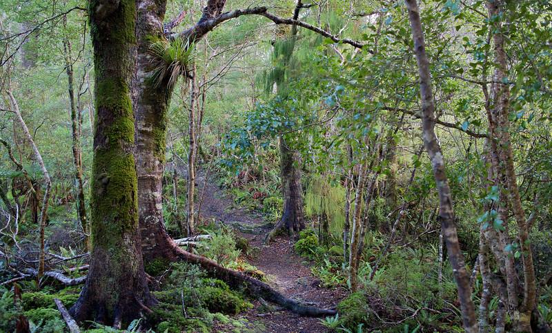Path beginning Ridge Track Kaitoke Regional Park Aug 13