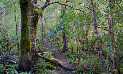 Path beginning Ridge Track Kaitoke Regional Park Aug 13