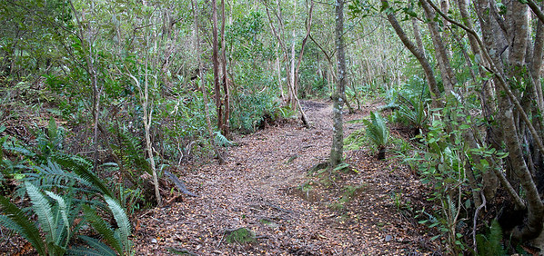 I was going to do an easy short(ish) walk of around 8km along the Kaitoke Ridge Track and turn back at around the half way point. The track is 10km one way and to do it you usually have a car at both ends, but since I don't have two cars I walked the whole track, came out at Te Maru, stopped to restock food (as I hadn't taken any) then walked back via the main road, back to the car at Kaitoke Regional Park, or a little over 20km later.   Actually I was very pleased with myself as it was pretty easy really, just a matter of endurance - even the walk up the passing lane next to the Twin Lakes was fun  http://sportypal.com/Workouts/Details/3508327