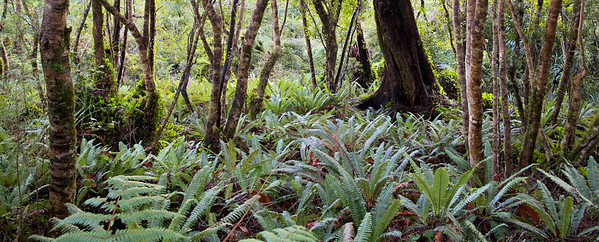 Trees and Ferns Kaitoke Regional Park Aug 2013