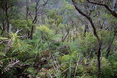 A steep track off Ridge Track down to the Hutt RIver. It's not often I turn back but although you can't see it, the descent was getting very steep and it had rained last night. The hard clay underfoot was getting slippery - it was just asking for a slip, a fall, a sprained ankle, sprained knee etc.  http://sportypal.com/Workouts/Embed/3365817