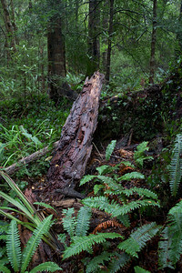 Old Log Kaitoke Regional Park Aug 2013 (2)