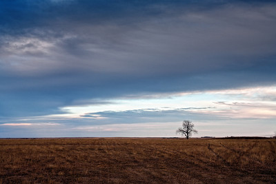 A lonely tree is consumed by the expansive clouds overhead.