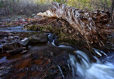 An aging sun-baked log was carried to its final resting place many years ago by the white water that runs through Amity Creek every spring.  This spot is found right off of Seven Bridges Road in Duluth, Minnesota.