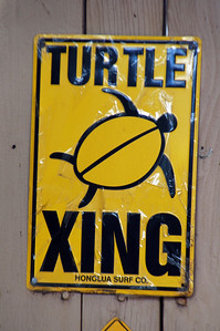 Chun's Reef Area  Turtle XING  North Shore of Oahu, Hawaii North Shore of O'ahu, Hawai'i