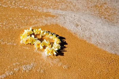 plumeria, white and yellow