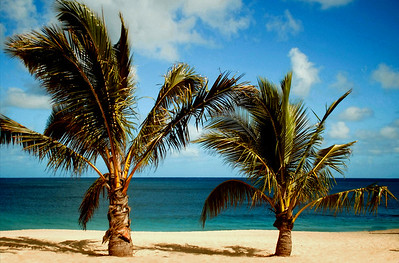Two short palm trees on Sunset Beach