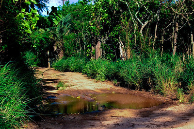 Hale'iwaSandy Road with a puddle  North Shore of O'ahu, Hawai'i