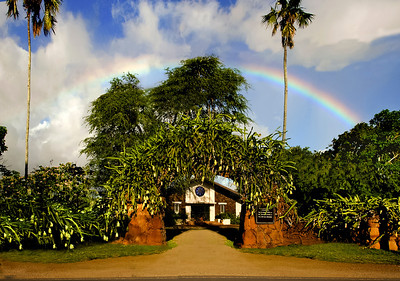 Lili'uokalani Church with a rainbow overhead Night Blooming Cereus flowers on the Lava Rock wall bloomed the previous evening 2004