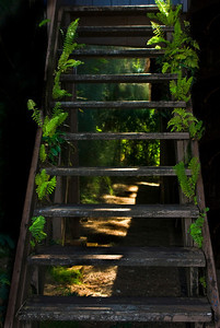 Fern Staircase, green grows well in the tropics ~  North Shore, Oahu, Hawaii
