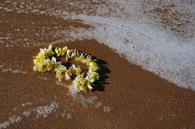 Sunset BeachYellow and white plumeria picked and ready for lei making by Moki on the North Shore, Oahu, Hawaii