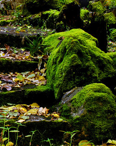 Mossy stairway hidden somewhere in Waimea Botanical Gardens  North Shore of Oahu, Hawai'i