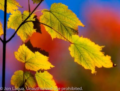 Fall Color (through a filter)