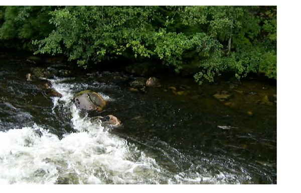 this is a still from a little video P shot of the salmon running up stream