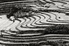 Rice terrace contours at harvest time with horse, Hoi Lung Sun, north Vietnam